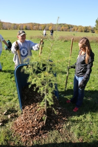 Volunteers plant trees as part of Branching Out in Cedar Rapids, IA in 2014.